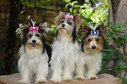 3 biewers with bows in hair