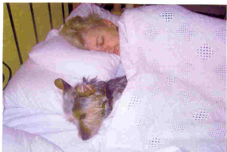 Sweet Crossbreed in bed with child, both sleeping peacefully